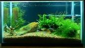 My Fabulous Fish Tank