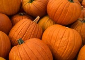 Pumpkins $6 Friday afternoon or Saturday morning