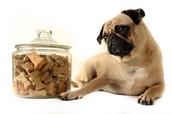 Produits naturel et bio pour les chiens et chats
