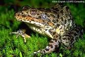 Animals in the Wetlands