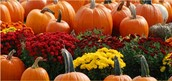 When you're looking for a great pumpkin picking farms?