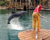 אתר הדולפינים