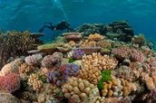DIVE IN THE GREAT BAREER REEF