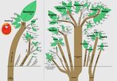 Language Family Tree