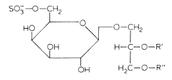 glyco lipids