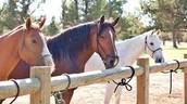 JULY 20: HORSEBACK RIDING