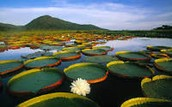 To the right is Pantanal---------->