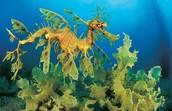 Самые необычные морские обитатели