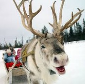 Reindeer and pony rides