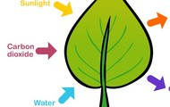 what happens in photosynthesis.