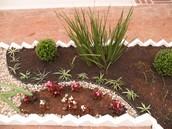 Los clorófitos