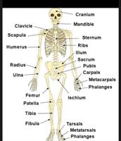 labeled skeleton