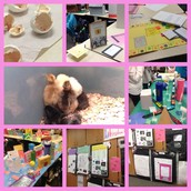 Mrs. Brown's 3rd Quarter Celebration & Project Open House