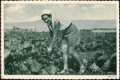 אישה עובדת אדמה