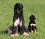 Snuppy (right) and it's mom (left)