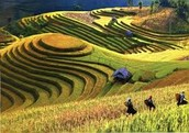 Farming Method - Number 2