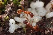 Ant's jobs