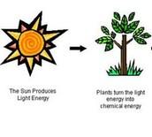 Light energy turning into chemical energy