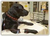 Detection, Treatment, & Prevention