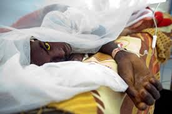 10 Facts about yellow fever