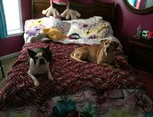 These are my dogs.