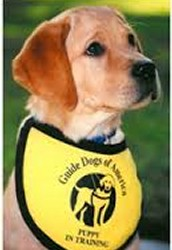 Support Guide Dogs Today!