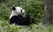 To learn more about Panda's and for contribution visit