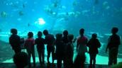 Fun at the Georgia Aquarium!
