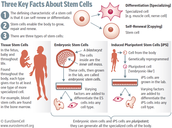 The Three Kinds Of Stem Cells