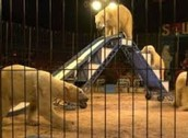 animal abuse in circuses