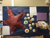 Star Fish, Sand Dollars, & Puffer FIsh