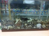 Our classroom tank
