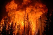 Most forest fires