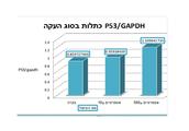 גרף 2 - P53/ GAPDH כתלות בסוג העקה