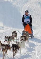 Coker follows The Iditarod Trail Sled Dog Race!