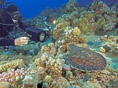 Information for Underwater Filmmaker