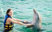 Yo nadé con delfines a SeaWorld.