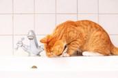 Drinkende kat