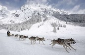 Some Facts about the dogsled race