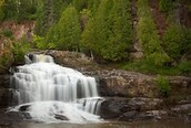 Minnesotas breathtaking forests!