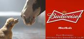Budweiser dog commercials