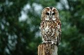 owls have found heads