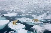 Ice Melting in Arctic
