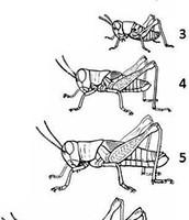 Example of Incomplete Metamorphosis