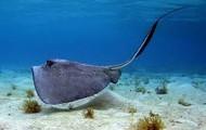 salt water animal