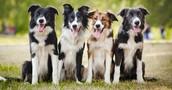 SEARCH & RESCUE DOGS