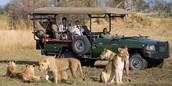 Description of a  Safari in Botswana