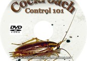 Effective Pest Control - The Dos and Do nots