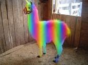This is a rainbow Llama.