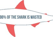 A Quote From Shark Survivor